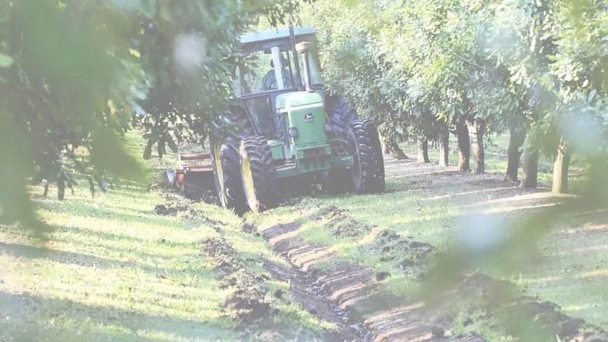Nghị định 210/2013/NĐ-CP – Hỗ trợ Doanh nghiệp trồng cây Mắc ca
