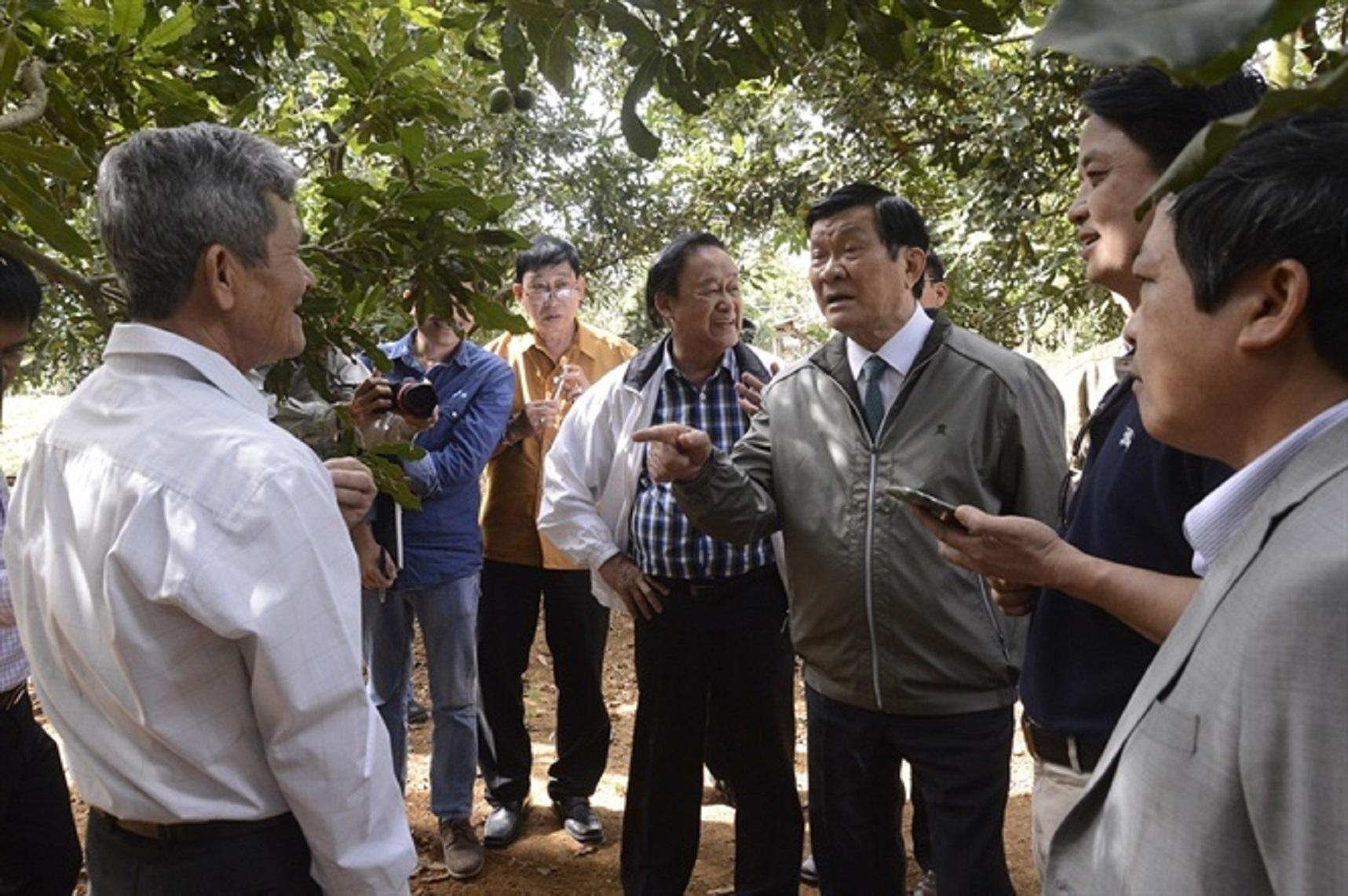 Nguyên Chủ tịch nước Trương Tấn Sang thăm vườn mắc ca ở Lâm Đồng