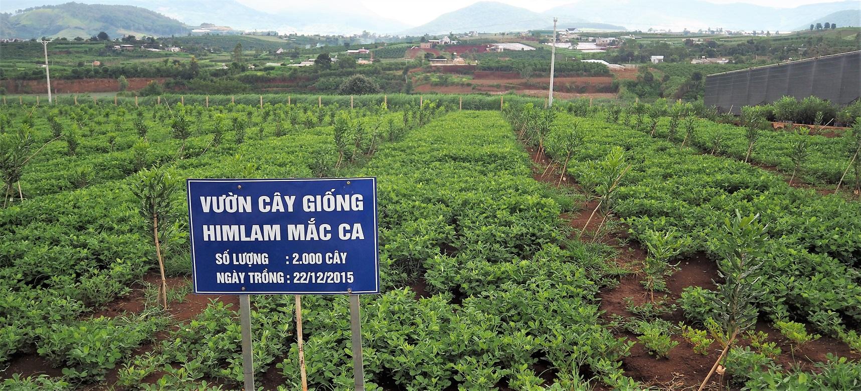 Hình ảnh vườn mắc ca 2000 cây tại Vườn ươm Công ty Him Lam Mắc Ca